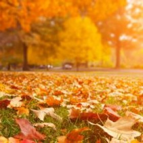 What to do with those falling leaves…don't waste them!