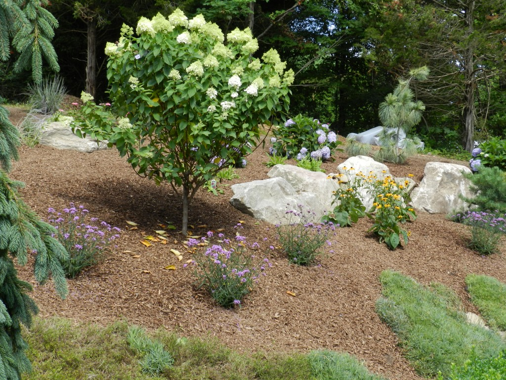 Native vs nuisance bolton landscape design masonry inc for Garden design vs landscape architecture